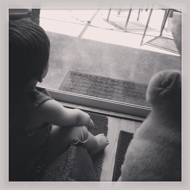 6.8.13 ~ a fav that shows the bond between Liam & Timber ~ watching Daddy cut the yard.