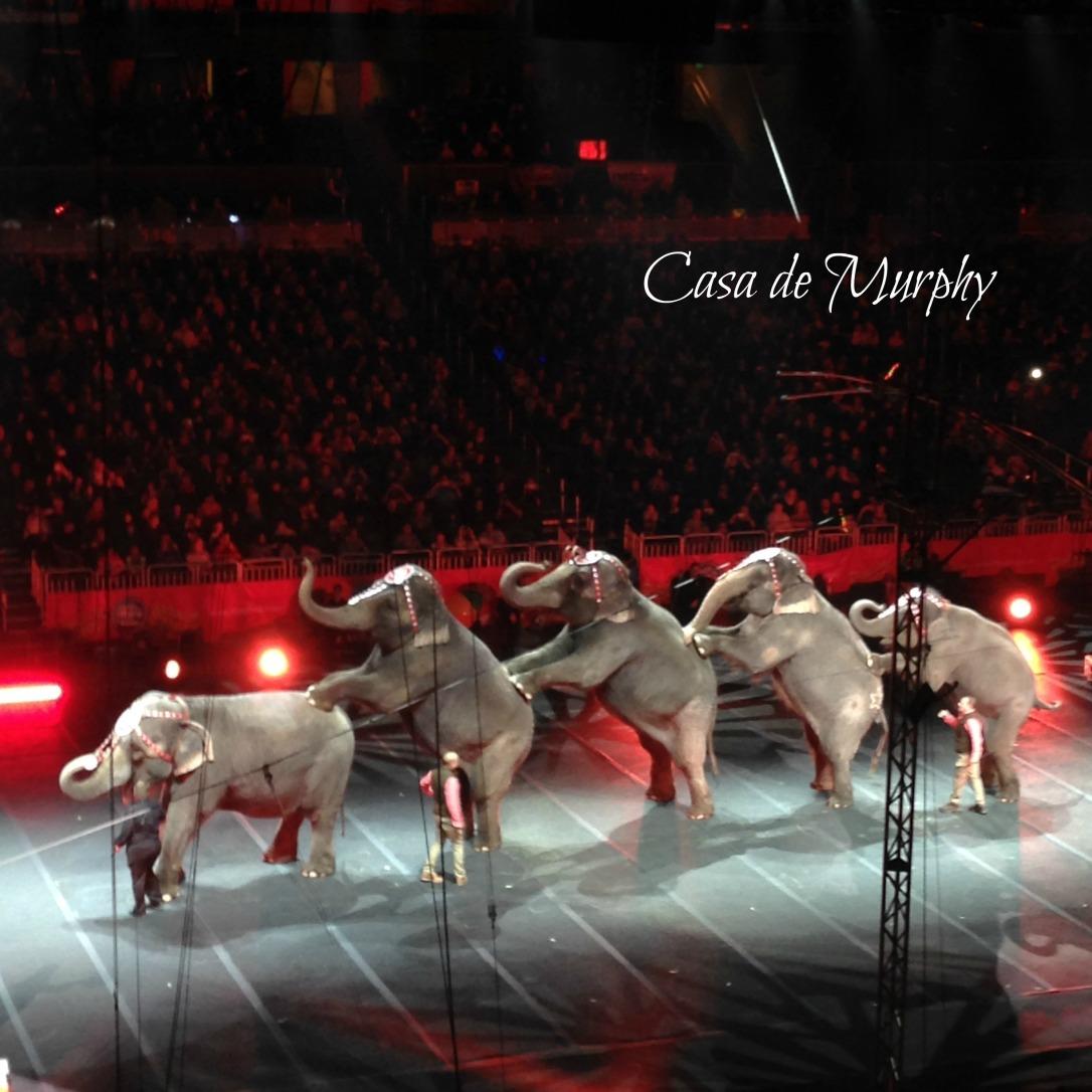 2015-01-10_Circus Extreme elephants