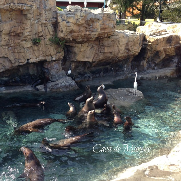 2015-02-21_edited sea-world-001