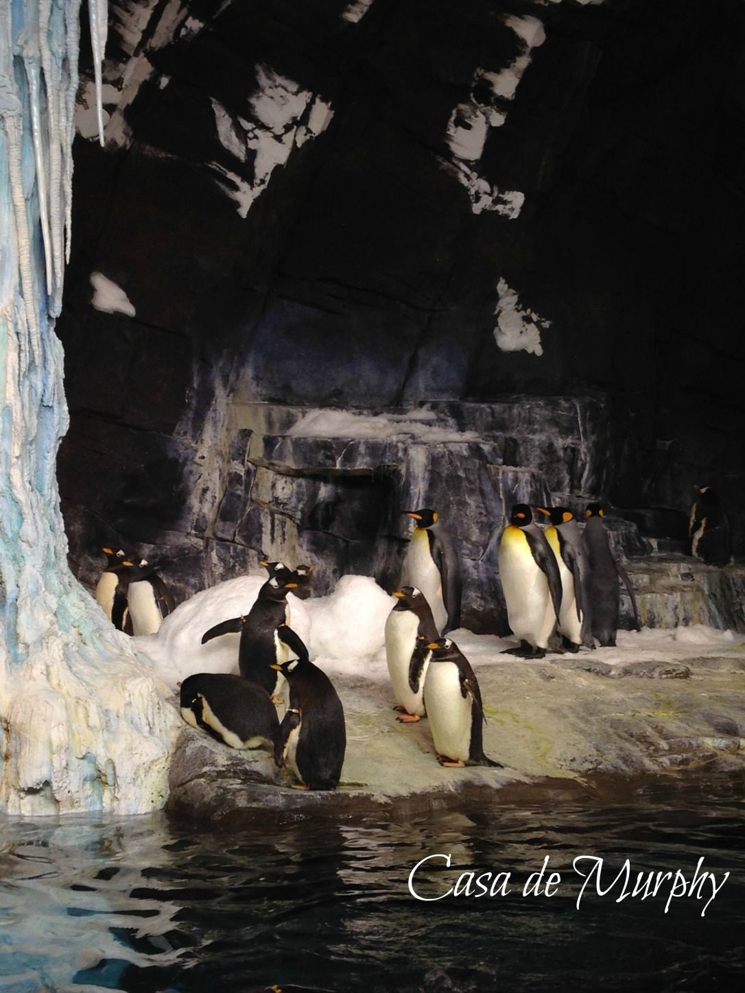 2015-02-21_edited sea-world-012