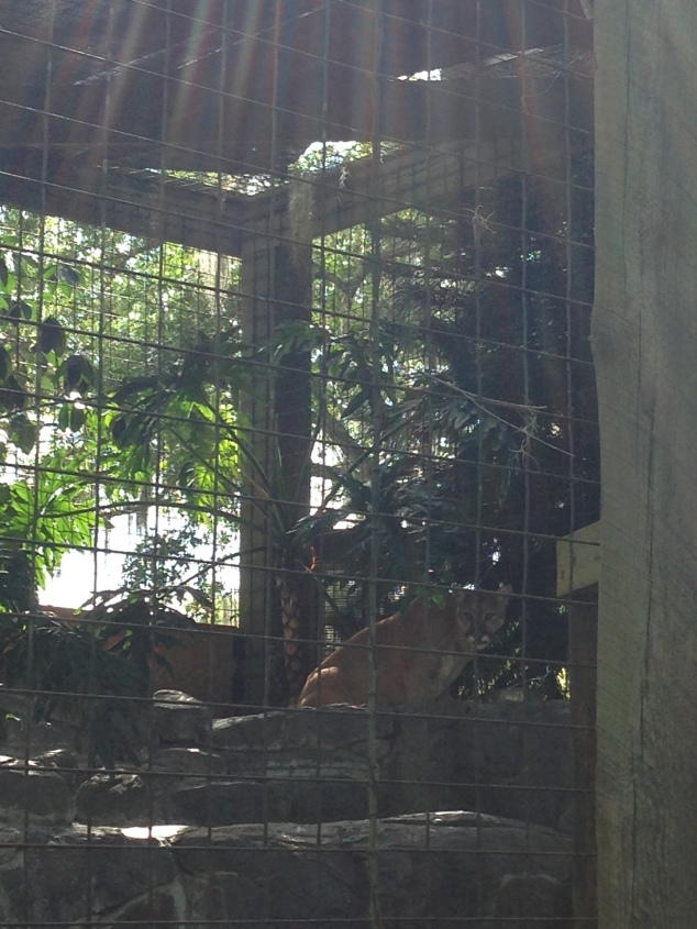 2016-04-10_Central FL Zoo 006
