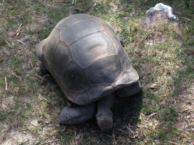2016-04-10_Central FL Zoo 008