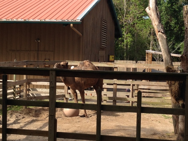 2016-04-10_Central FL Zoo 009