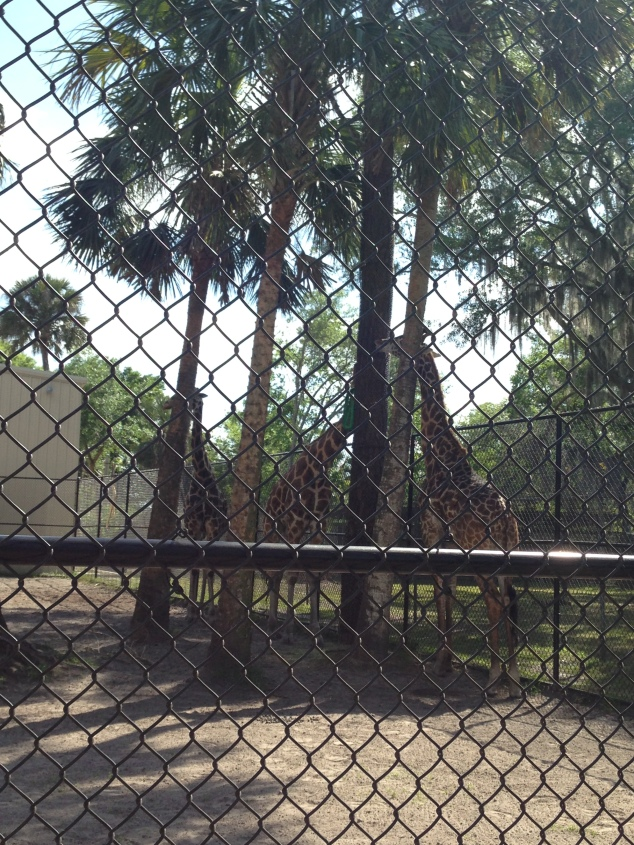 2016-04-10_Central FL Zoo 012