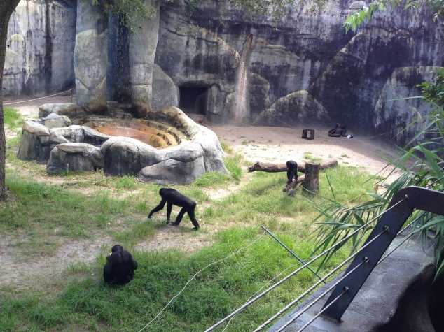 2016-07-31_Jacksonville Zoo_Liam 5th Bday 031